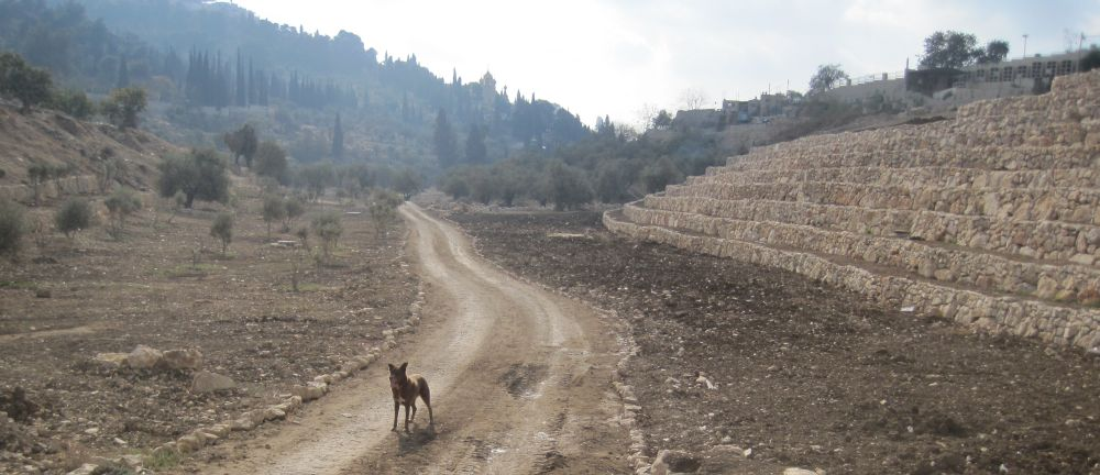 Path in the Kidron  valley on the south of the old ciy of Jerusalem
