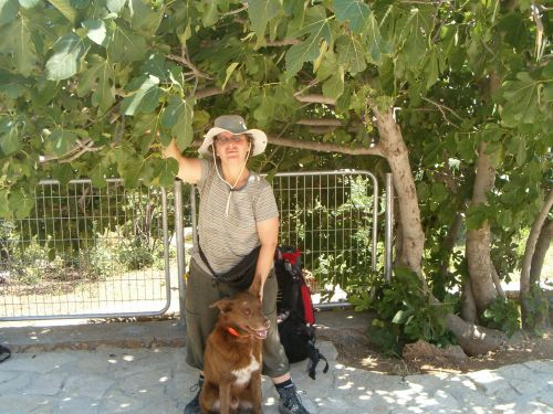 Diana and Taffy under a Fig Tree