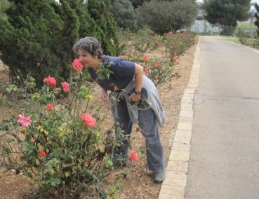 Taking time to smell the roses at the Rose Garden near the knesset