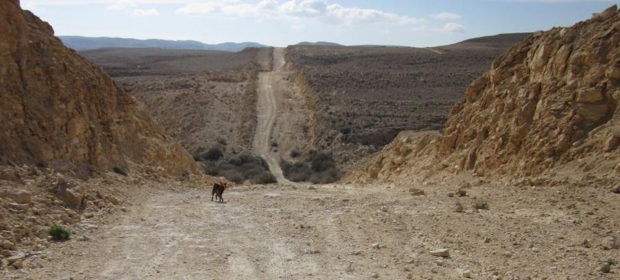 Dirt road along the Ashkelon Eilat Oil Pipeling