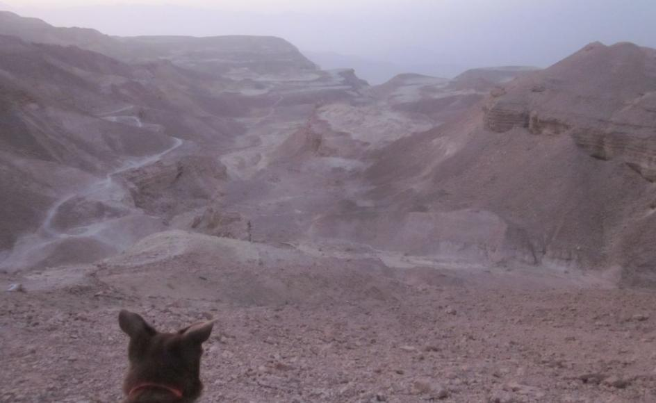 Taffy looking down the Milhan Decent (מעלה מלחן) to Timna