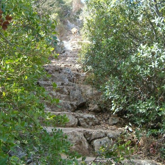 Long steep stairs up from Oren Park