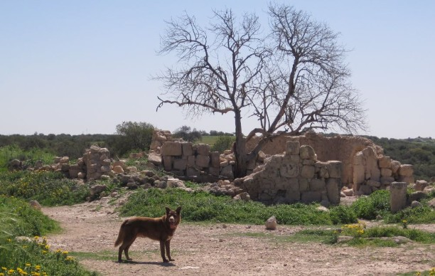 Taffy in front of ruined building in Kirbat Tzura (צורה)