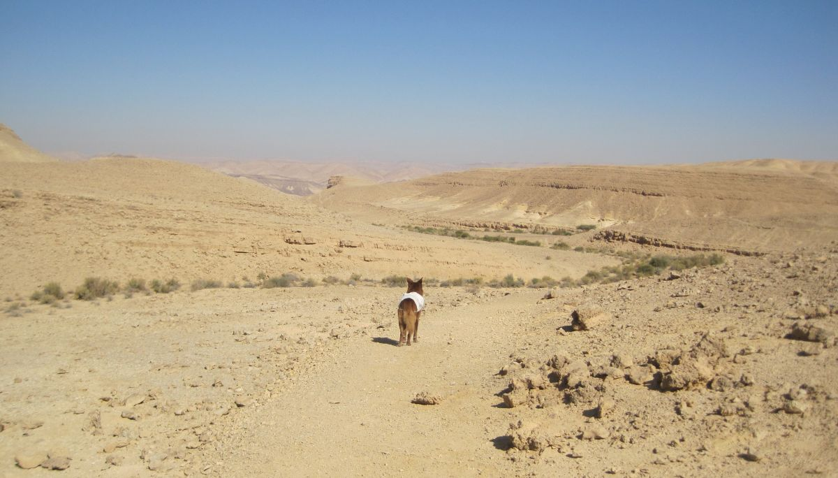 Taffy on the path towards the Yamin Ascent  מעלה ימין