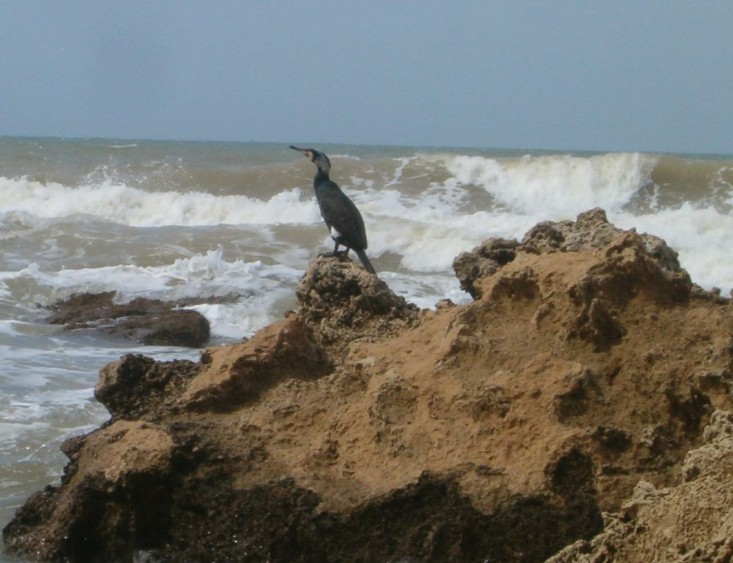 Cormorant silhouetted against the waves.
