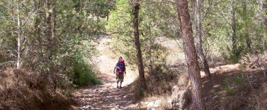 Don ahead in the Ben Shemen Forest