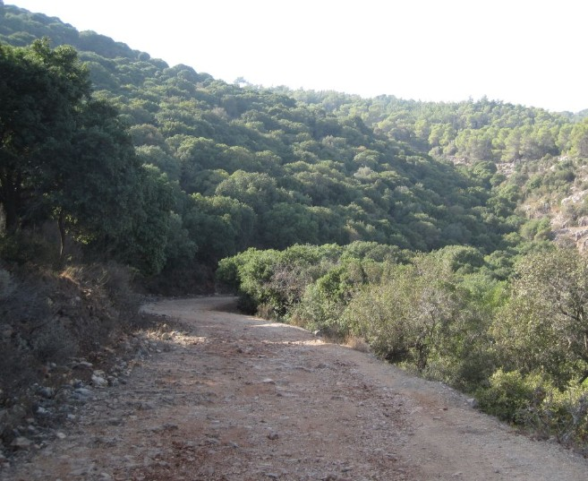 Dirt road, green trail, 4128 on Carmel Mountains
